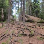 Красноярские столбы: корни